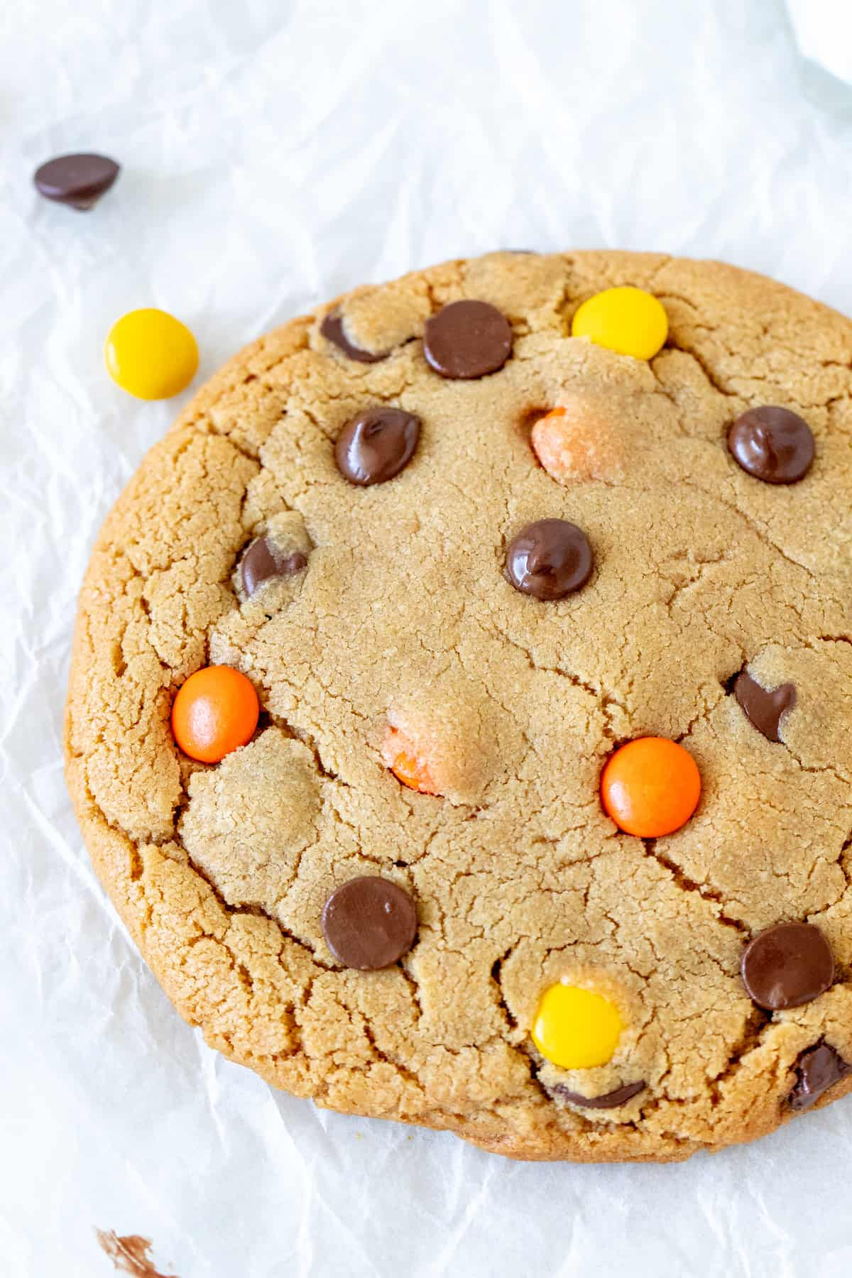 Very large peanut butter cookie with chocolate chips and Reese's Pieces